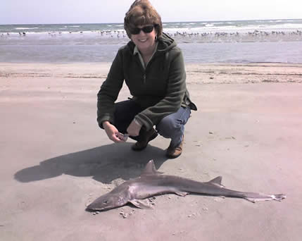 We Love To Take The Boat Over Island And Walk Along Beach It Is Really Cool Sand Sharks